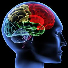brainimage.jpg